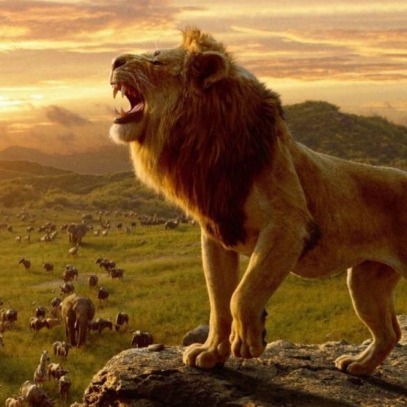 O Rei Leão supera Pantera Negra e se torna 10ª maior bilheteria da história 38