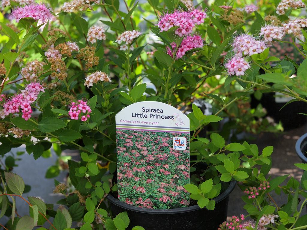 B Q Plants Available