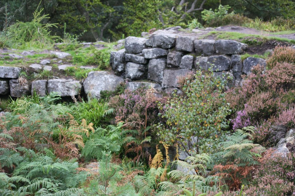 Tappoch Broch - a low wall overgrown with heather, barcken and seedling birch