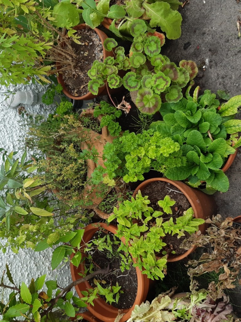 herb plants in pots against a white wall
