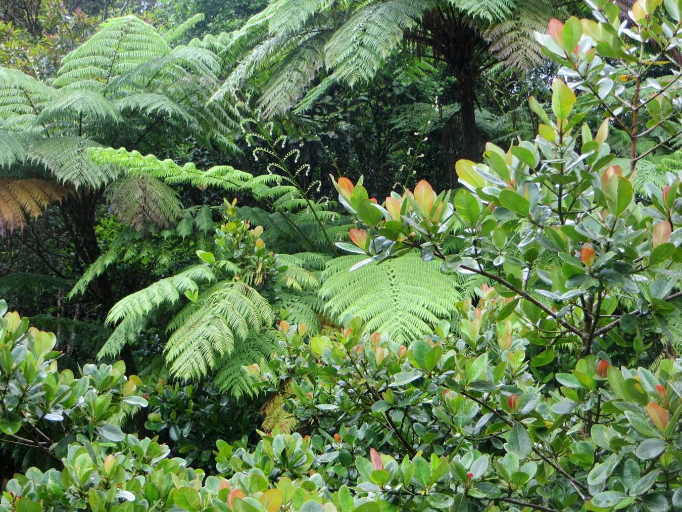 Dominica:  See Greenery!  Take a Nap!