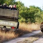 Safaritouren Tansania Tipps
