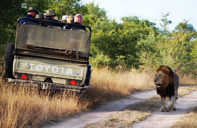 Safari Tansania Tipps