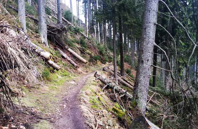 Harzer Hexen-Stieg Wanderweg