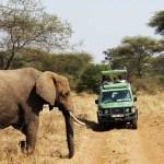 Safari Tanzania 18% VAT Tourismussteuer