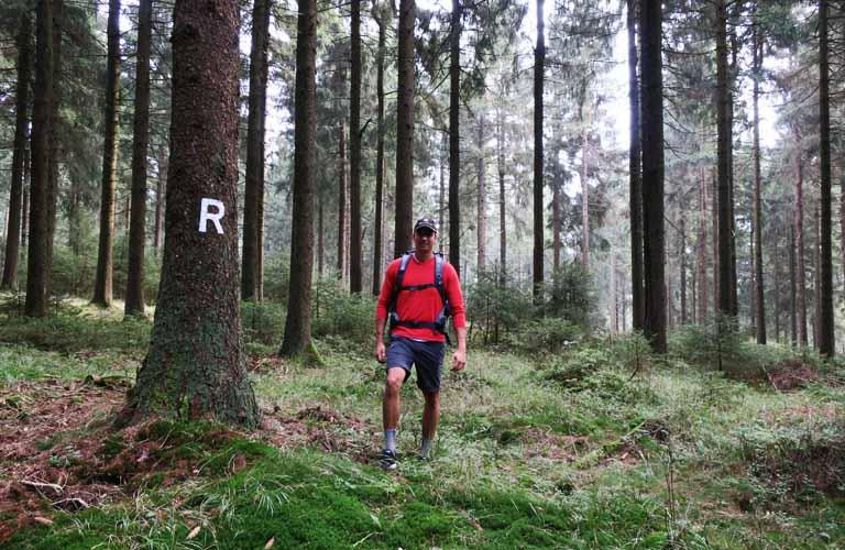 Rennsteig im Thüringer Wald