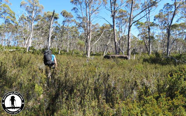 australien walls of jerusalem track tasmanien