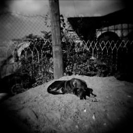 A dog in Diepsloot