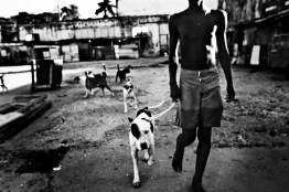 Young men with fighting dogs in the old chocolate factory.