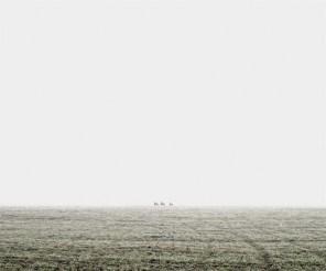 Deers, North Hungary