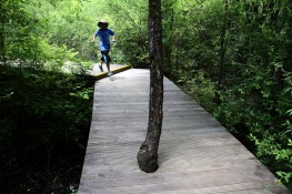 A young boy passes through a forest in the Jiuzhaigou National Park. All of the pathways within the park are boarded so that little to no trampling occurs and damage to the forests is limited.