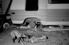 Dog and carcass, Batesland, Pine Ridge Reservation. (2010)
