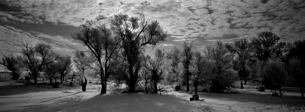 Snow covered trees, Pine Ridge Rervation. (2010)