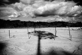 VENEZUELA, SANTA ELENA DE UAIREN REGION. JANUARY 2010. The shadow of a tree lies in a deforested area. This place was a jungle years ago. The first thing that miners do while searching for diamonds and gold is to clear out the land by cutting down the trees.