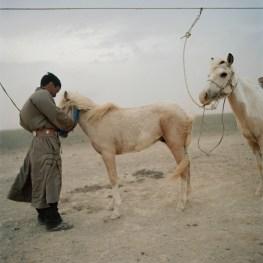 Mongolia, Gobi, Omongovi, 2012 Tuvshinbayar is tying his horses to avoid them to escape during the storm