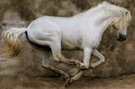 02._White_Stallion__Mexico__2004