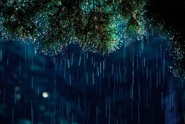 11._Pine_Needles___Rain__Houston__2001