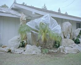 USA, Kalifornien, Laguna Woods: Während im Rentner Dorf Laguna Woods ein Haus renoviert wird, sind die Pflanzen sicher verpackt. Bilder eines Landes, dass uns so fremd und doch so nah scheint. Fotografiert auf einer Reise durch 22 Bundesstaaten durch die USA im Jahr 2015 und 2016. FOTO: Mario Wezel
