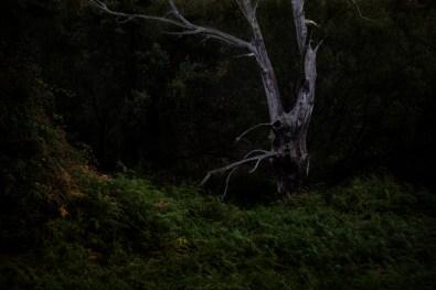 25_Oskar Alvarado_Where Fireflies Unfold