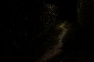 26_Oskar Alvarado_Where Fireflies Unfold