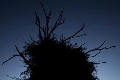 31_Oskar Alvarado_Where Fireflies Unfold