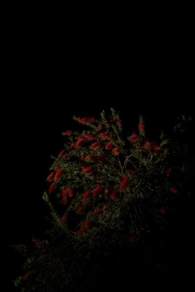 PLANTARIUM_07