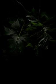 PLANTARIUM_13