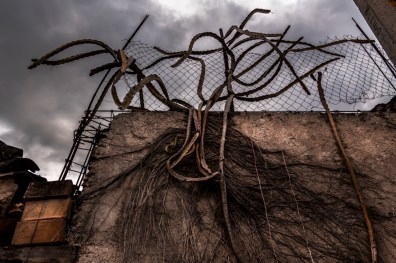 Dried roots of Cactus on a wall in the comunity of Tixtla Guerrero Mexico.Tixtla is where the normal Isidro Burgos of Ayotzinapa is settled. Its been more than a year and still no results of the 43 missing students. Guerrero Mexico On november 7th 2015.