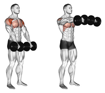 Image result for  Front Two Dumbbell Raise