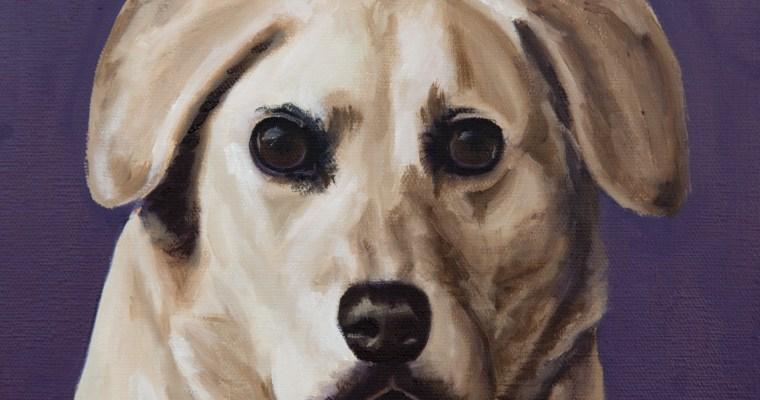 """Dopey"" Dog Portrait"