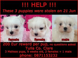 Defenceless puppies stolen from their home in Co Clare 21-6-13