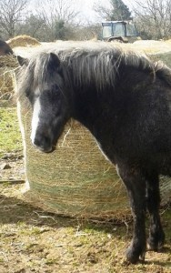 Patsy 2yr old filly