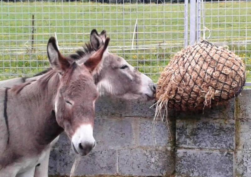 Donkey arrivals 6-8-16