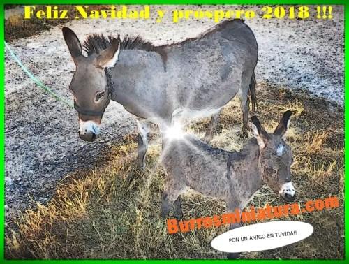 Z Feliz navidad2