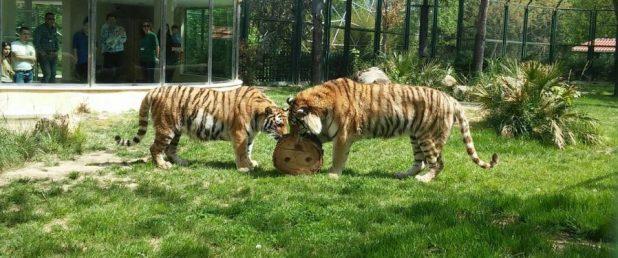 نتيجة بحث الصور عن حديقة حيوان بورصة