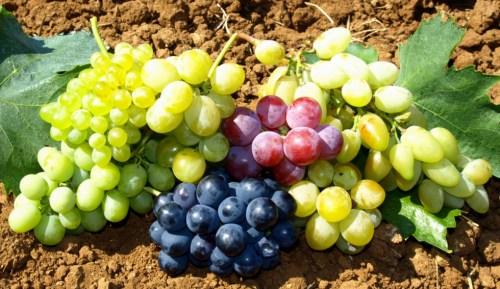 üzüm foto - Bursa Tarım
