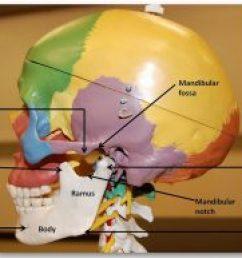 temporomandibular joint [ 1024 x 790 Pixel ]