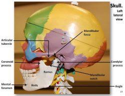 hight resolution of temporomandibular joint