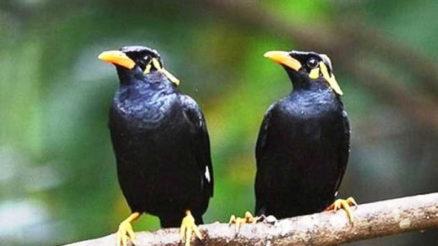 UPDATE Daftar Harga Resmi Burung Lovebird Semua Jenis 2019