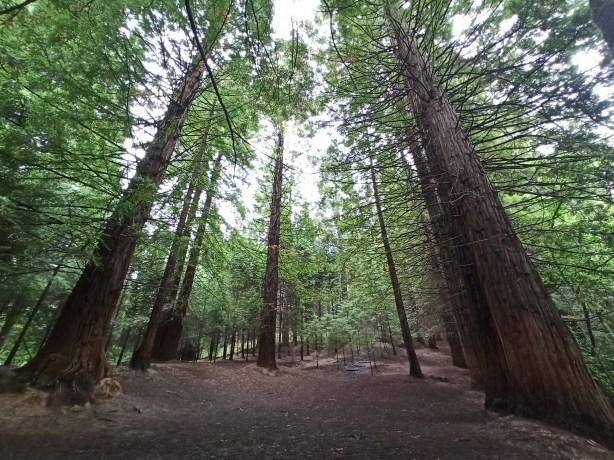 El Bosque de Secuoyas