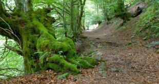 Camino por el Bosque de Carlac