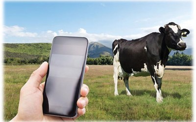 Agritech gets electronic shepherd to prevent livestock theft