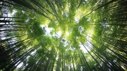Manchester-based Company Donates profits for International Day of Forests