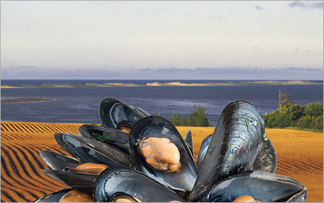 Atlantic Aqua Farms is a leading mussel producer in North America