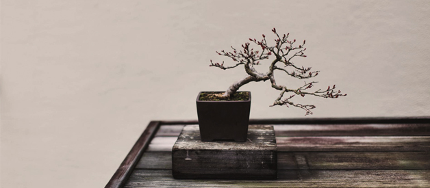 Bonsai tree watering cans