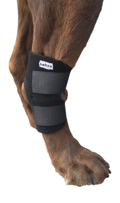 Buddy Products Labra Co. Dog Canine Rear Leg Hock Joint Wrap Protects Wounds