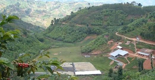 Pierre's Coffee Plantation-1