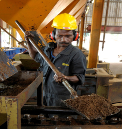 Palm kernel expeller, another byproduct of palm oil processing, also has potential as a biofuel. Credit: NBPOL