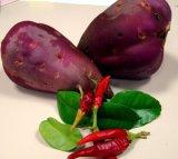 Vanuatu Agriculture Research Centre's sweet potato. Credit;=: Tok Pisin Service, Radio Australia