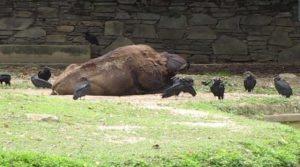 animal-mort-zoo-venezuela